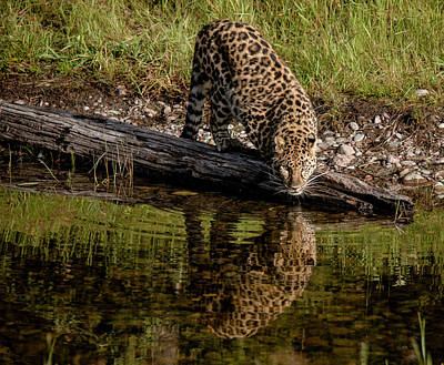 Photograph - Getting A Drink by Teresa Wilson