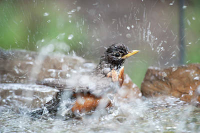 Photograph - Getting Clean by Dan Friend