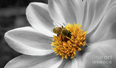 Photograph - Getting Close To Bee by Vyacheslav Isaev