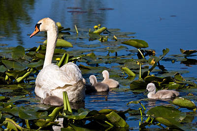 Metro Park Photograph - Getting Close To Mom by James Marvin Phelps