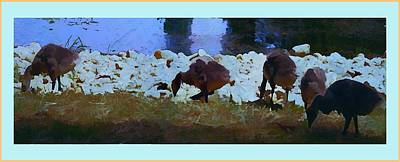 Getting My Ducks In A Row Art Print by Mindy Newman
