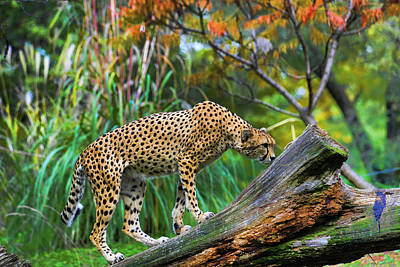 Getting The Scent Art Print by Keith Lovejoy