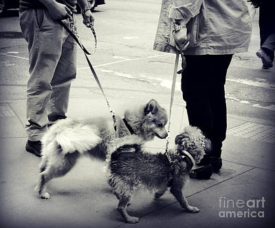 Photograph - Getting To Know You - Puppies On Parade by Miriam Danar