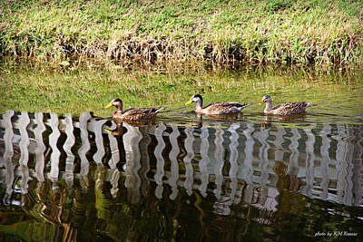 Photograph - Getting Your Ducks In A Row by Kathy M Krause
