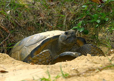 Photograph - Tortoise And Home by David Lee Thompson