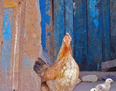 Photograph - Ghana Hen Painted by Jamie Johnson