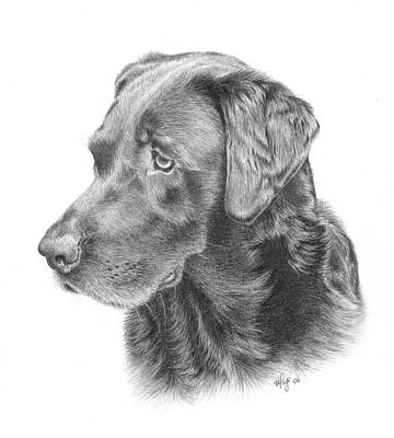 Chocolate Lab Drawing - Ghira - Chocolate Lab by Heather Page