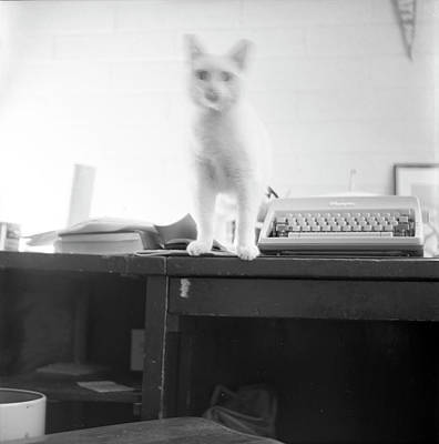 Photograph - Ghost Cat, With Typewriter by Jeremy Butler