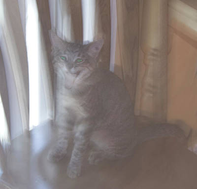 Photograph - Ghost Cat by Yulia Kazansky