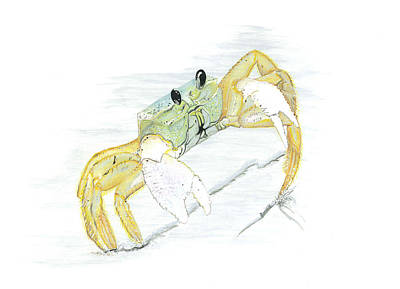 Painting - Ghost Crab Drawing The Line by Jason Girard