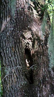 Photograph - Ghost Face In Tree by Cynthia Guinn
