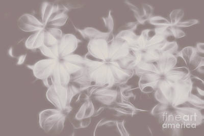 Nature Abstract Digital Art - Ghost Flower - Souls In Bloom by Jorgo Photography - Wall Art Gallery