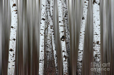 Photograph - Ghost Forest 1 by Bob Christopher