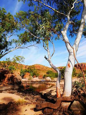 Photograph - Ghost Gum In Ormiston Gorge, West Mc Donald Ranges by Lexa Harpell