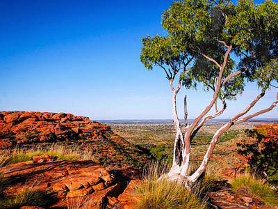Photograph - Ghost Gum On Kings Canyon - Northern Territory, Australia by Lexa Harpell
