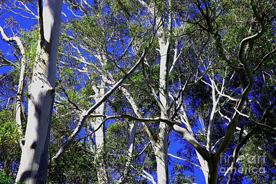 Photograph - Ghost Gums by Nareeta Martin