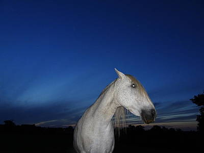 Photograph - Ghost Horse by Susan Baker