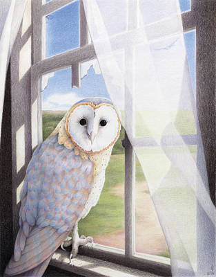 Barn Owl Drawing - Ghost In The Attic by Amy S Turner