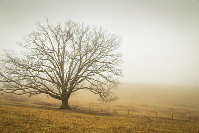 Photograph - Tree In Fog - Blue Ridge Parkway by Victor Ellison