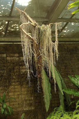 Photograph - Ghost Of Spanish Moss by Viktor Savchenko