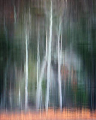 Reflection Photograph - Ghost Of The Trees by Bill Wakeley