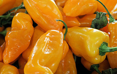 Photograph - Ghost Peppers by Kristin Elmquist