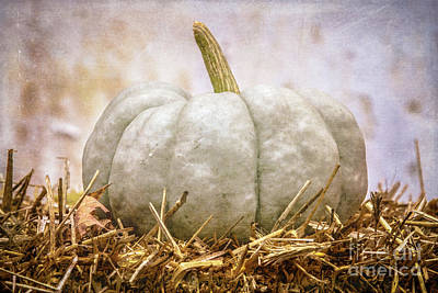 Photograph - Ghost Pumpkin by Eleanor Abramson