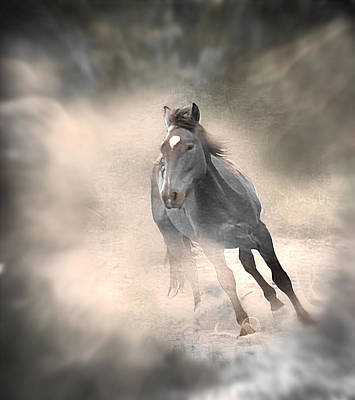 Horses Photograph - Ghost Rider's Mount by Michael Hamilton