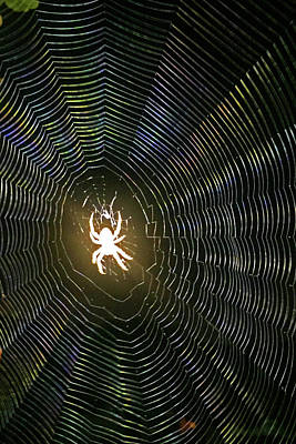 Photograph - Ghost Spider by Shoal Hollingsworth