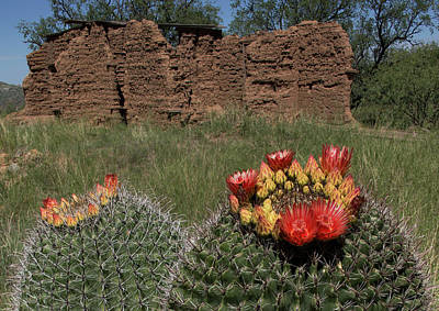 Photograph - Ghost Town Cactus Bloom by Tom Daniel