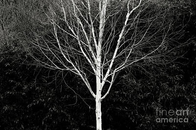 Photograph - Ghost Tree by Nicholas Burningham