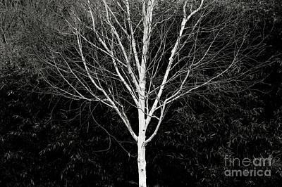 Photograph - Ghost Tree by Nicholas Burningham