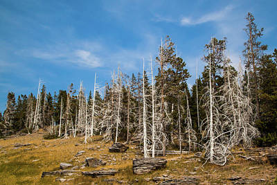 Photograph - Ghost Trees At Yellowstone by Lon Dittrick