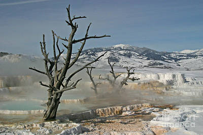 Photograph - Ghost Trees by Katie LaSalle-Lowery