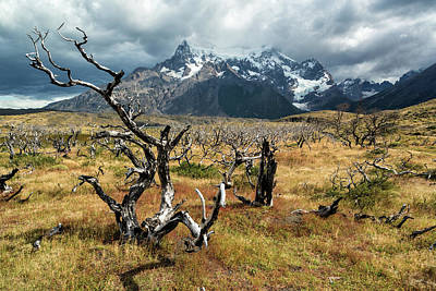 Photograph - Ghost Trees Of Patagonia by Stuart Gordon