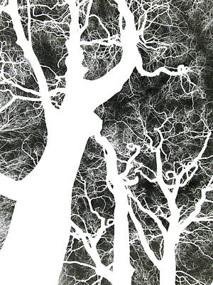 Invert Color Photograph - Ghost Trees by Philip Openshaw