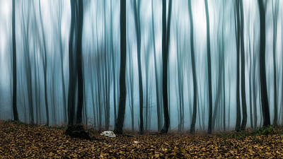 Photograph - Ghost Trees  by Plamen Petkov