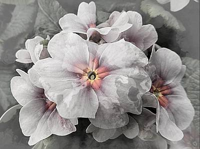 Photograph - Ghostly Primulas by Dorothy Berry-Lound