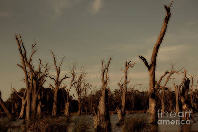 Ghostly Trees Art Print by Douglas Barnard