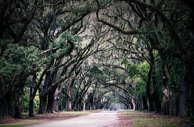 Savannah Fine Art . Savannah Old Trees Photograph - Ghosts Among The Trees Of Savannah by Ursa Davis