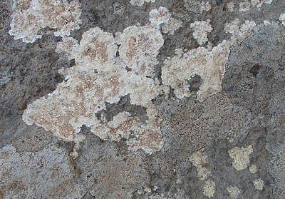 Photograph - Ghosts - Lichens On Mottled Rock by Robert Schaelike