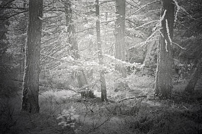 Of Autumn Photograph - Ghosts Of The Forest 3 by Tara Turner