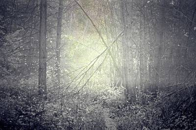 Photograph - Ghosts Of The Forest by Tara Turner