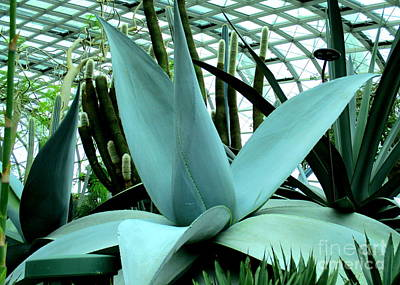 Photograph - Giant Aloe by Randall Weidner