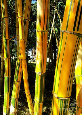 Photograph - Giant Bamboo Azores by Randall Weidner