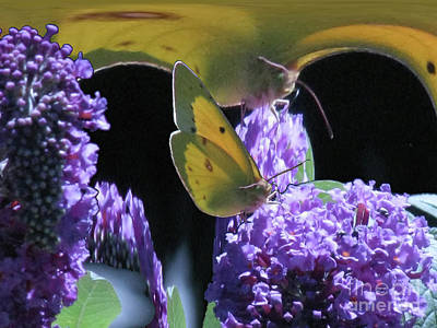 Digital Art - Giant Butterfly by Donna Brown