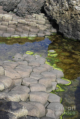 Photograph - Giant Causeway N. Ireland by Mary-Lee Sanders