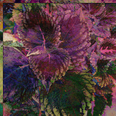 Digital Art - Giant Coleus by Barbara Berney
