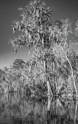 Cypress Tree Drawing - Giant Cypress 2 - Bw by Steve Harrington