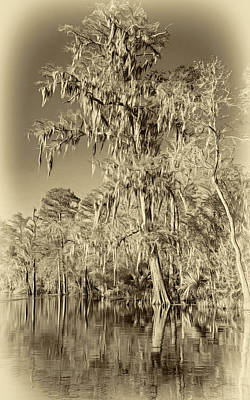 Cypress Swamp Digital Art - Giant Cypress 2 - Sepia by Steve Harrington